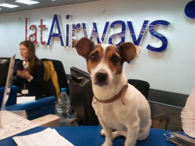 Phaedra checking in at the Nikola Tesla airport in Belgrade, Serbia for her return flight to Paris (Sunday, October 6, 2013)