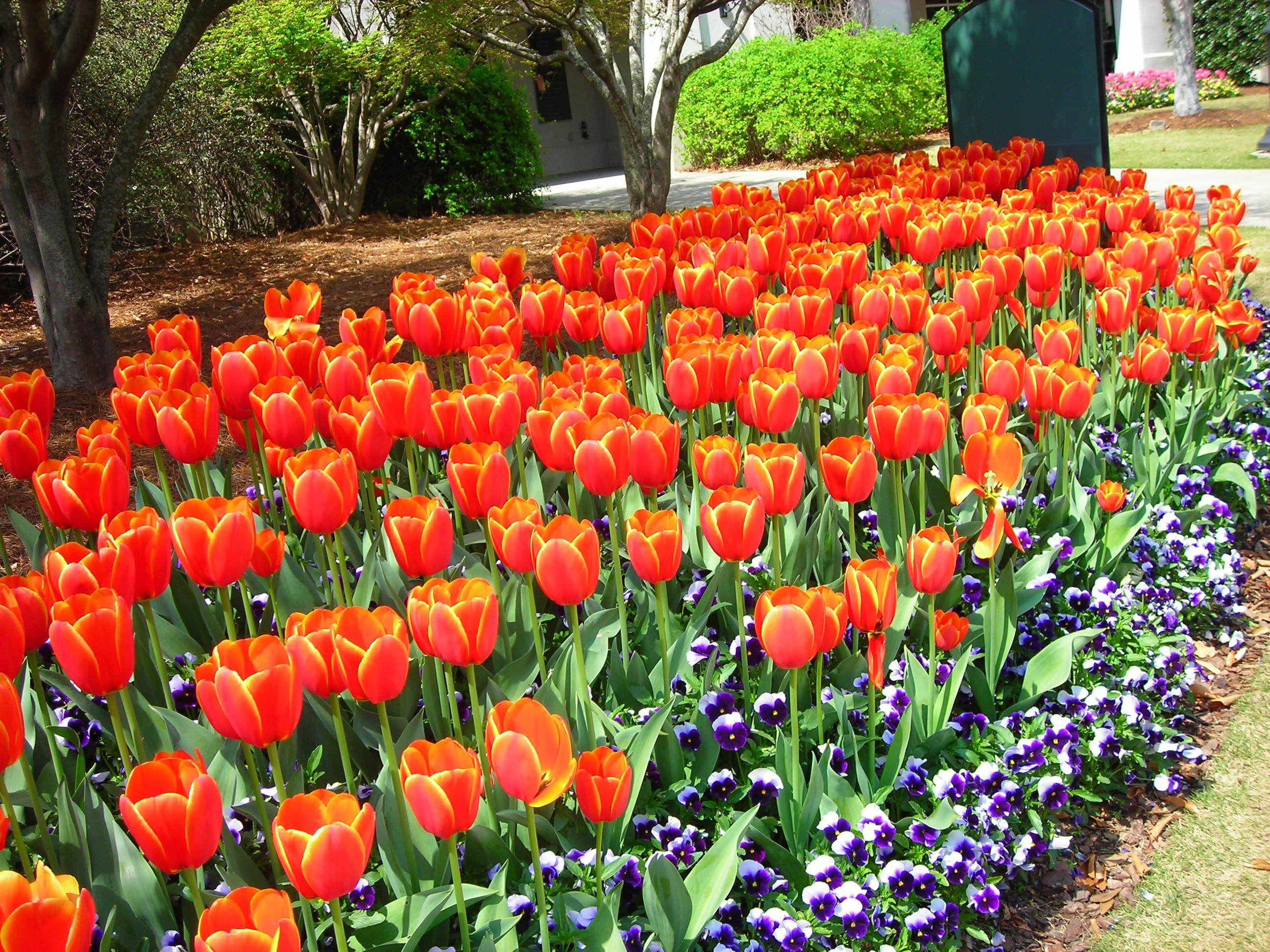 5586f46e6ec4a499283a61b0eae97426 - Birmingham Botanical Gardens Spring Plant Sale