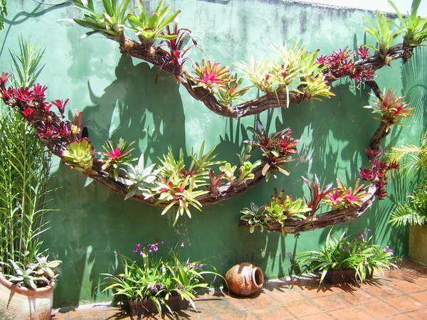 Montajes y decoraci n con bromelias foro de infojard n for Ideas para mi jardin