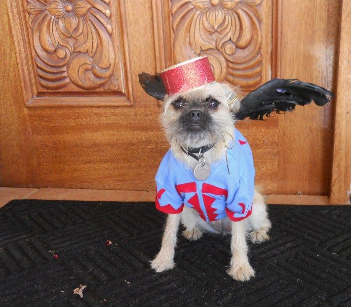 Wizard Of Oz Flying Monkey Costume My Handmade Dog Costume
