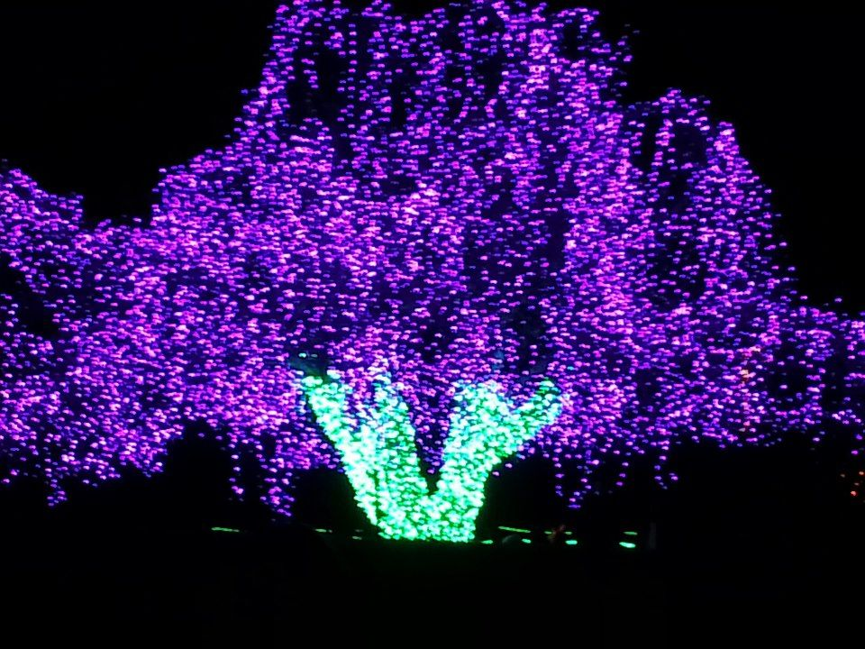 Zoolights At Pt Defiance Zoo And Aquarium In Tacoma Holiday Rocks And Crystals Fun Things To Do