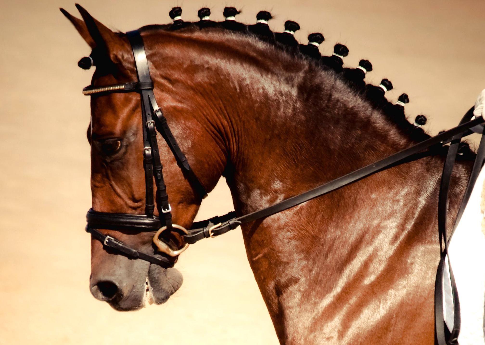 8 Wonderful Horse Hairstyles Cute In 2020 Horses Show Horses Horse Mane