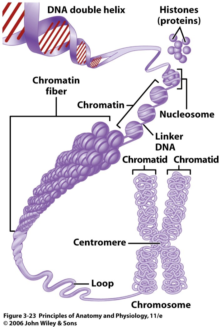 gene chromosome dna relationship book
