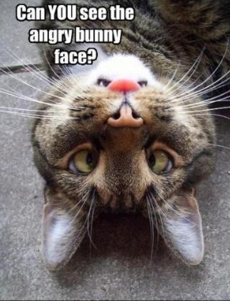 Can You See The Angry Bunny Face Dogs And CatsBig Hearts - 18 hilarious sad cat problems that might explain why your cats so moody
