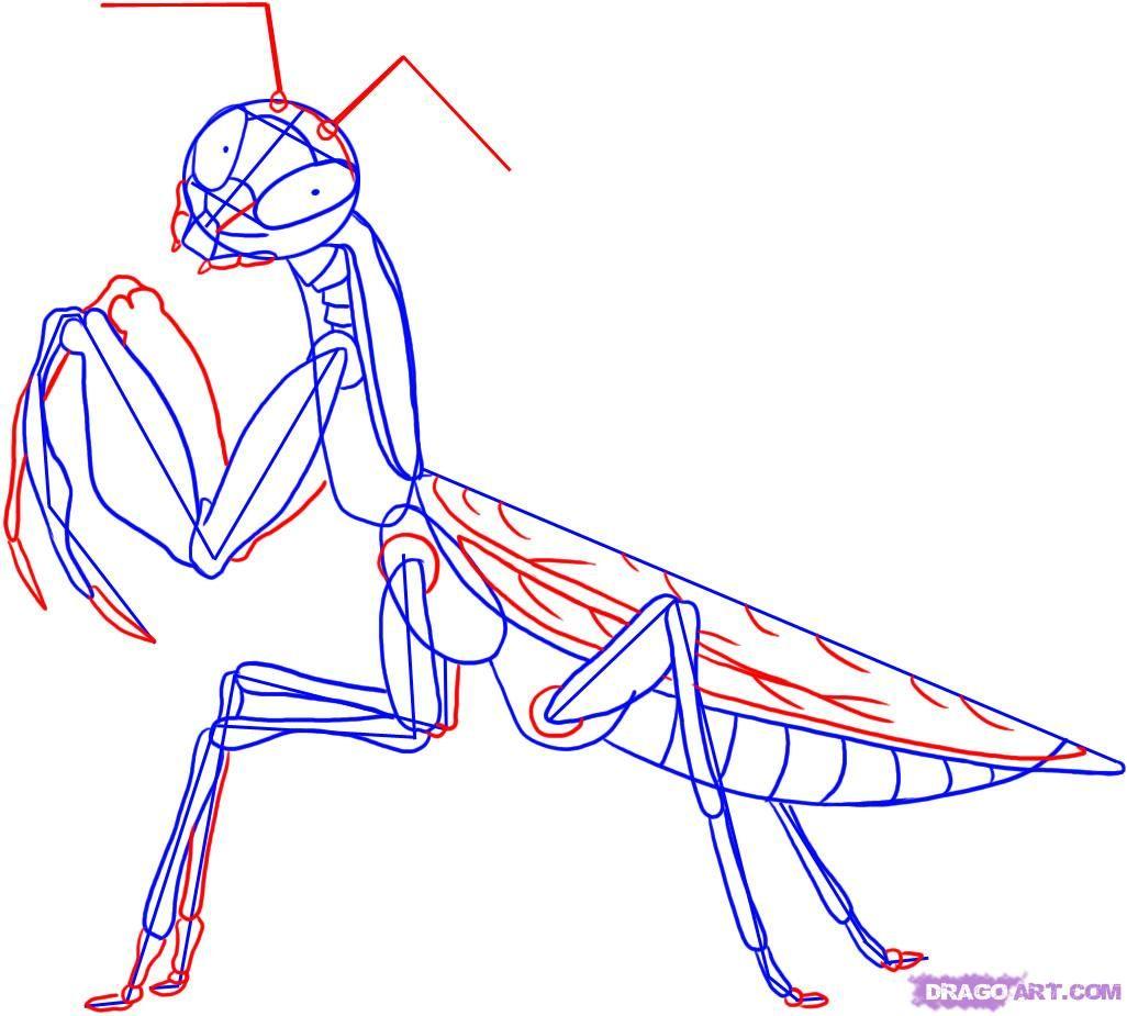 praying mantis anatomy - Google Search | Para dibujo realista ...