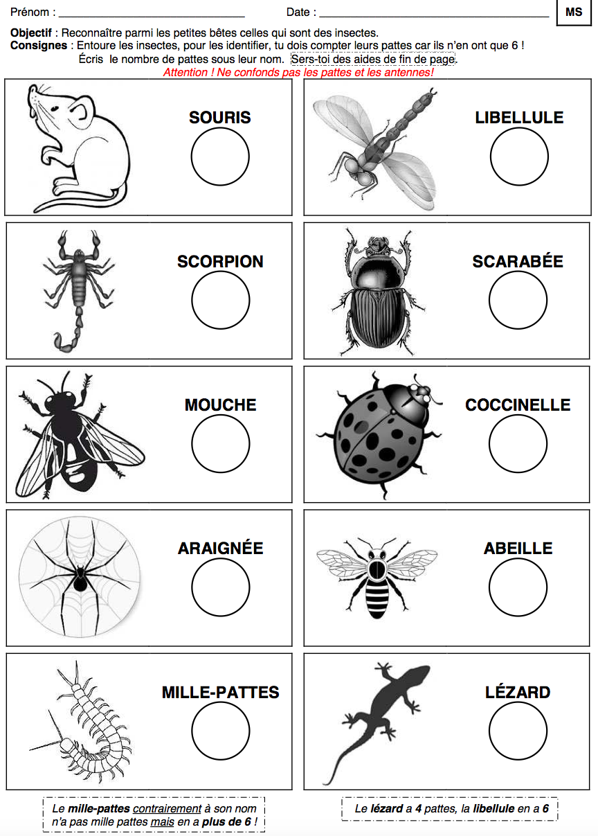 Des dizaines de fiches de travail imprimer pour le th me des insectes printemps jardin - Reconnaitre les insectes xylophages ...