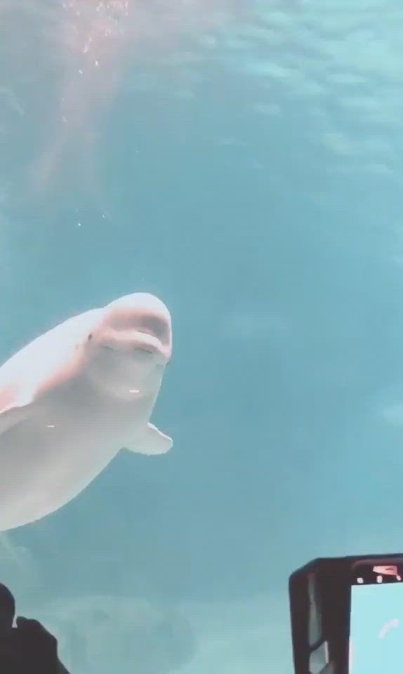 Photo of Cute White whale
