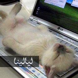 صور قطط مضحكة تنام في أماكن غير متوقعة على الإطلاق Kittens Funny Funny Cat Pictures Cats