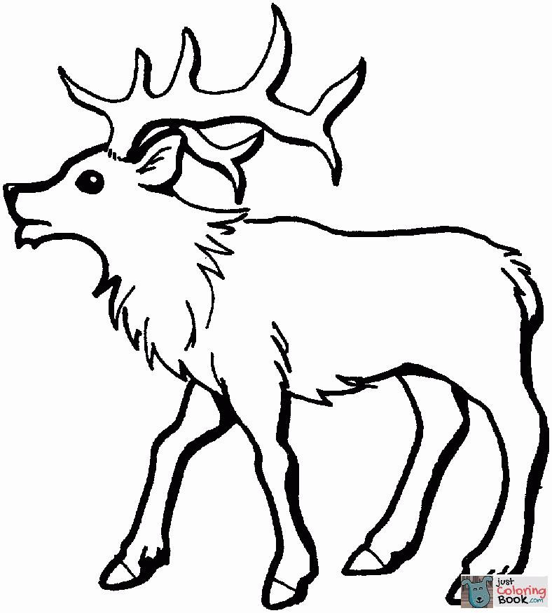 Young Elk Coloring Page Deer Coloring Pages Coloring Pages
