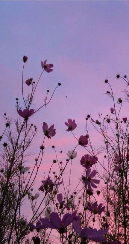 44+ Ideas Photography Flowers Peace