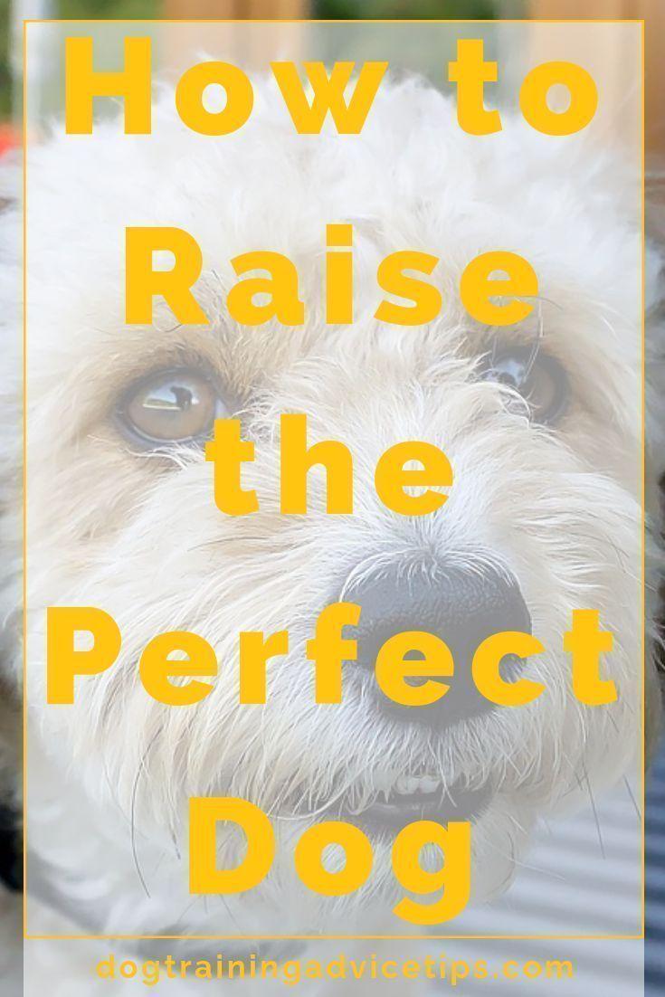 Dog Stuff For Summer Saleprice 9 In 2020 Dog Training Advice