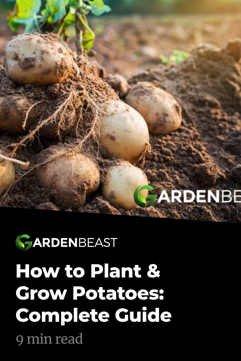 How to grow potatoes tips for planting growing complete