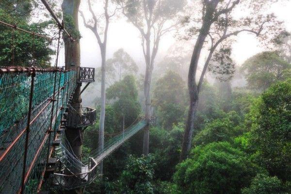 orangutan reserve borneo walkway & orangutan reserve borneo walkway   Projects u0026 Pioneers   Pinterest ...