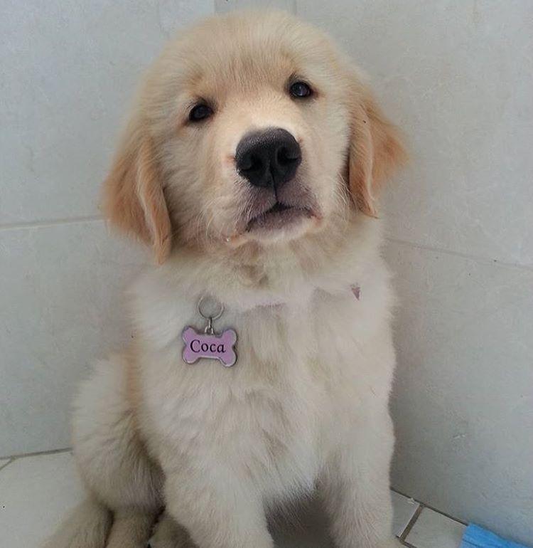Pin On Beautiful Pups