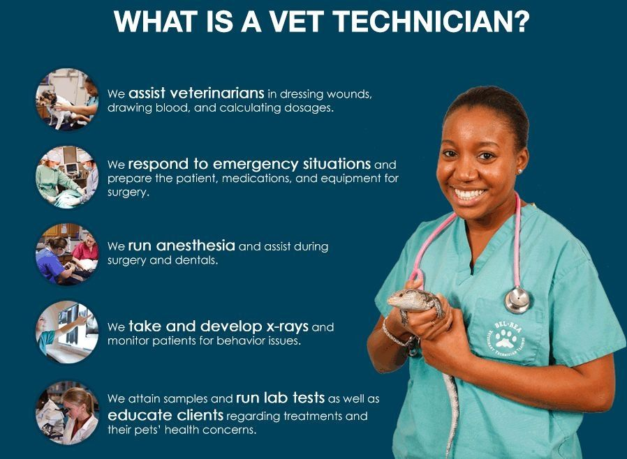 Pin by Haley Moore on Animal stuff Vet technician, Vet