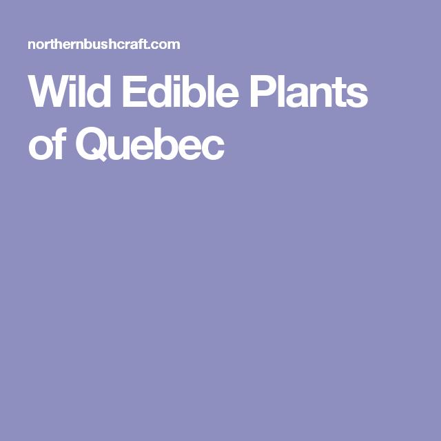 Wild Edible Plants of Quebec