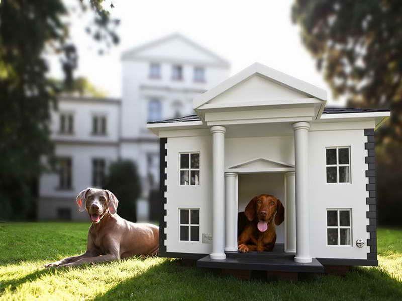 Luxury Indoor Dog Houses Luxury Indoor Dog Houses By