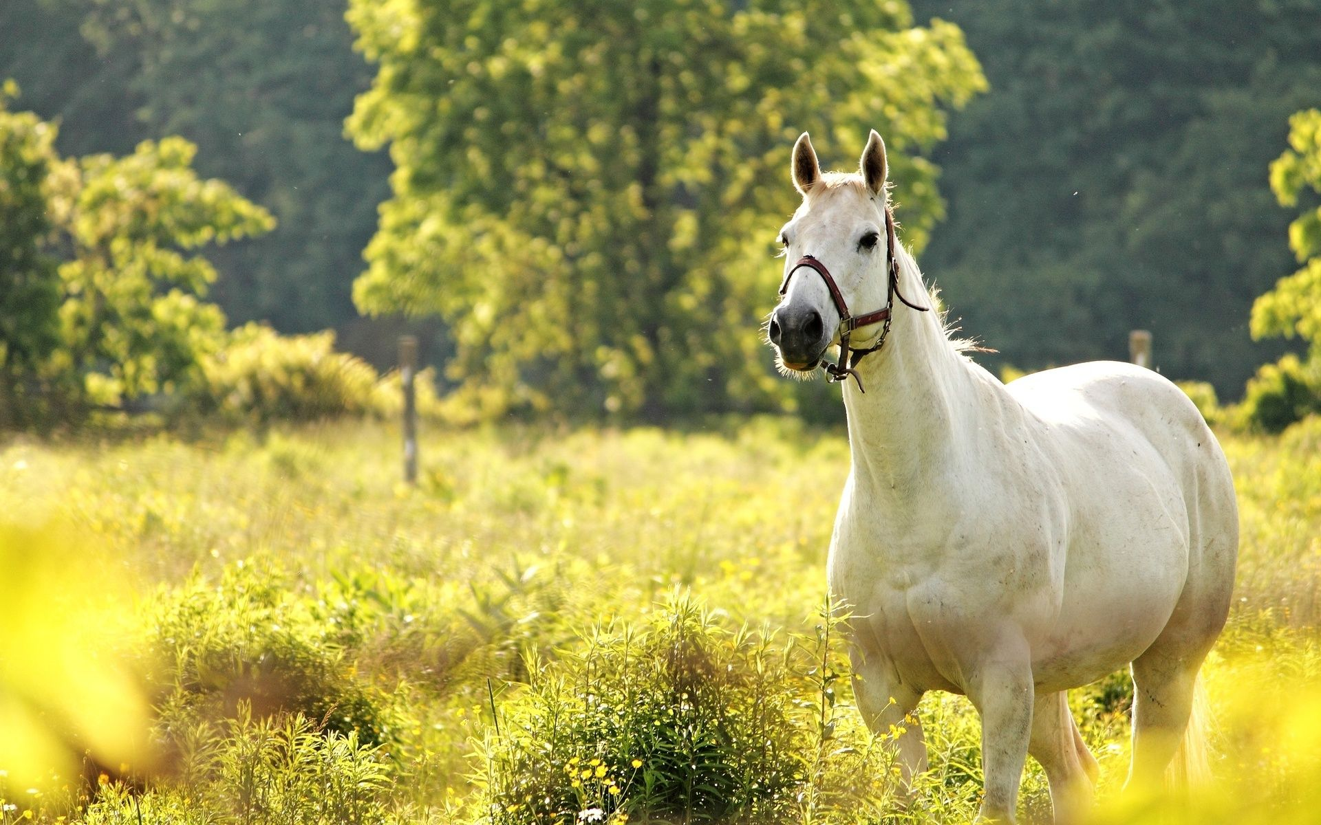 Must see Wallpaper Horse Scenery - 558c15a6cb883284fb5aa213d4b557d1  Photograph_783975.jpg