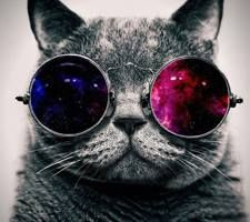 Epic cat cool pics pinterest cat and animal epic cat cat wallpaperhipster voltagebd Images