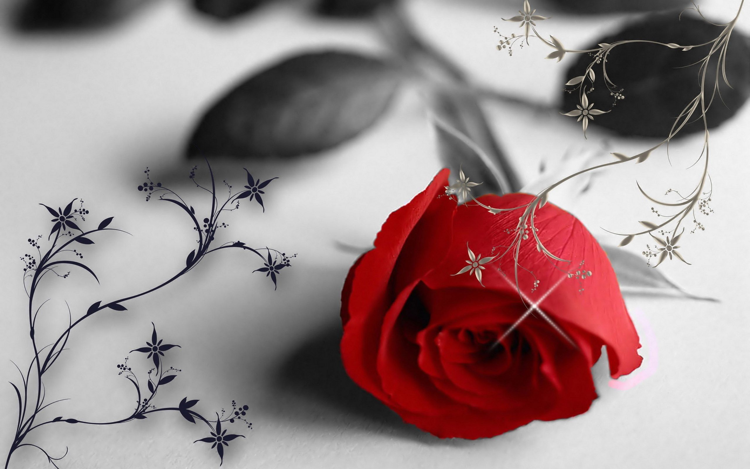 Red rose in a black and white wallpaper love moments