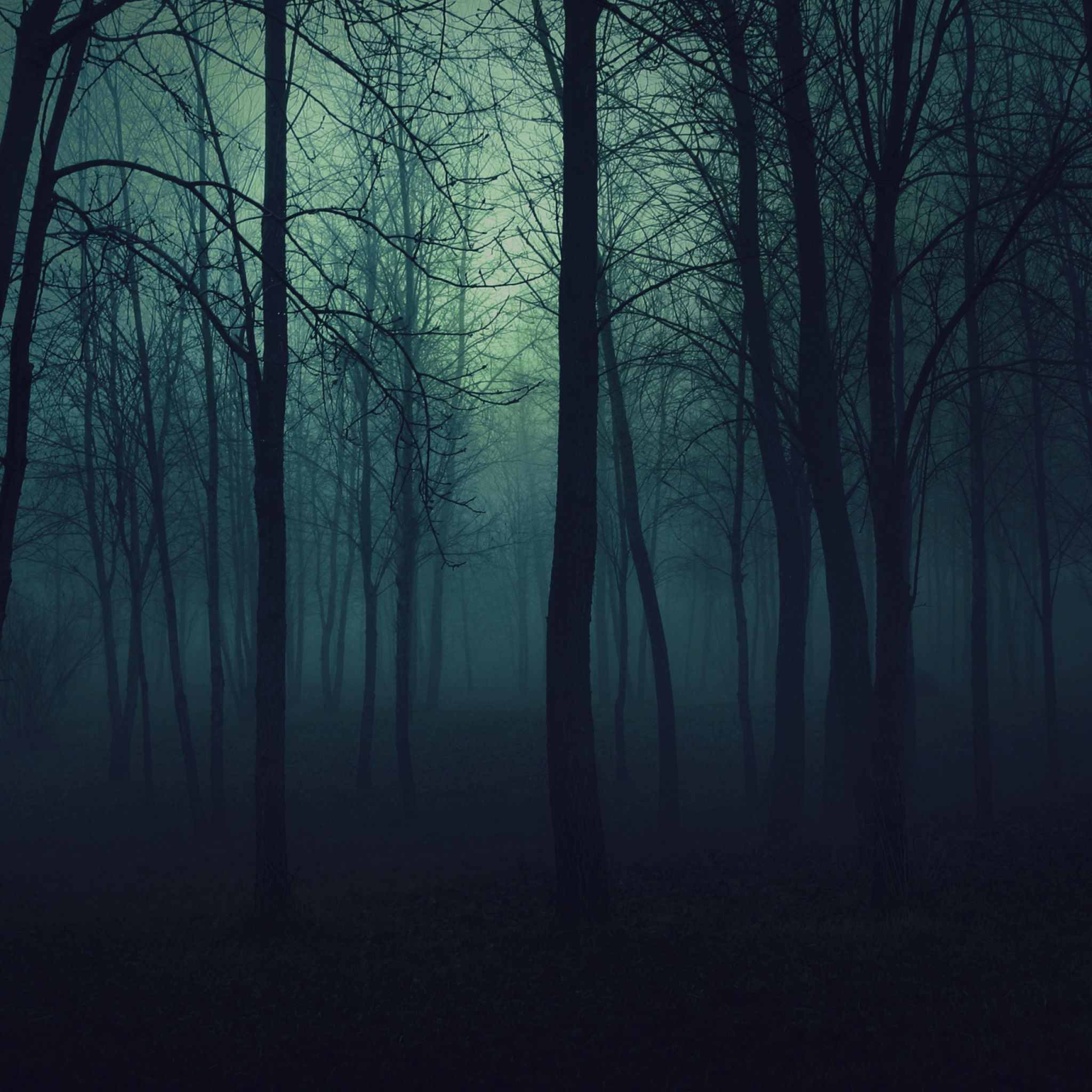 2048x2048 wallpaper madeira, árvores, sombrio, nevoeiro, névoa