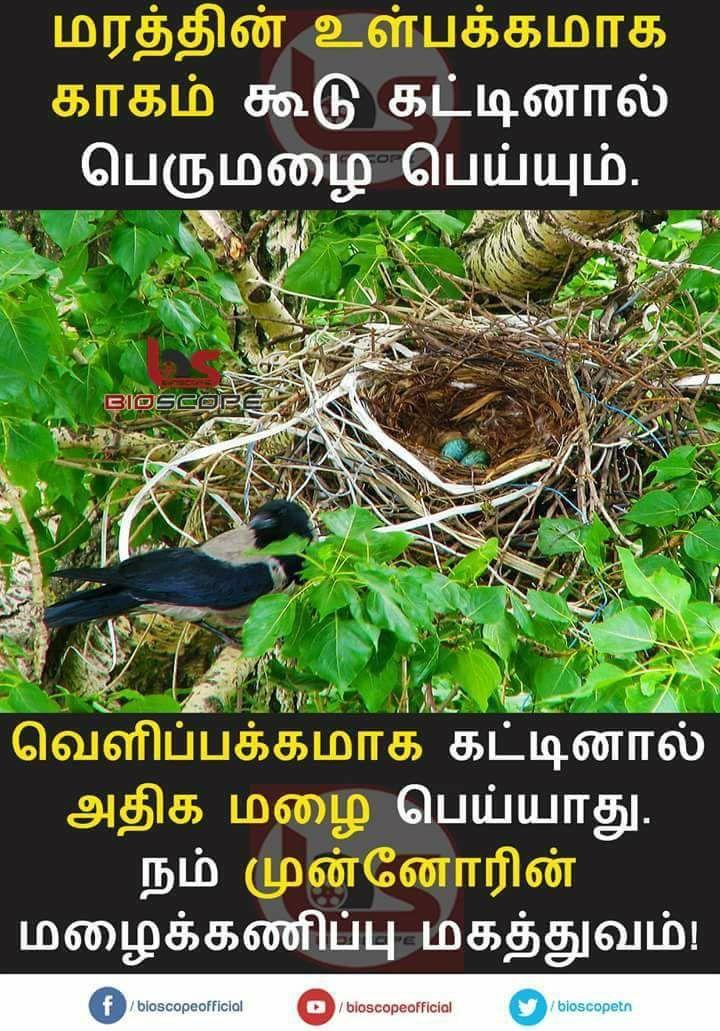 ṭåṃıĿ qȗọṭєṡ image by Angel Language quotes, Tamil