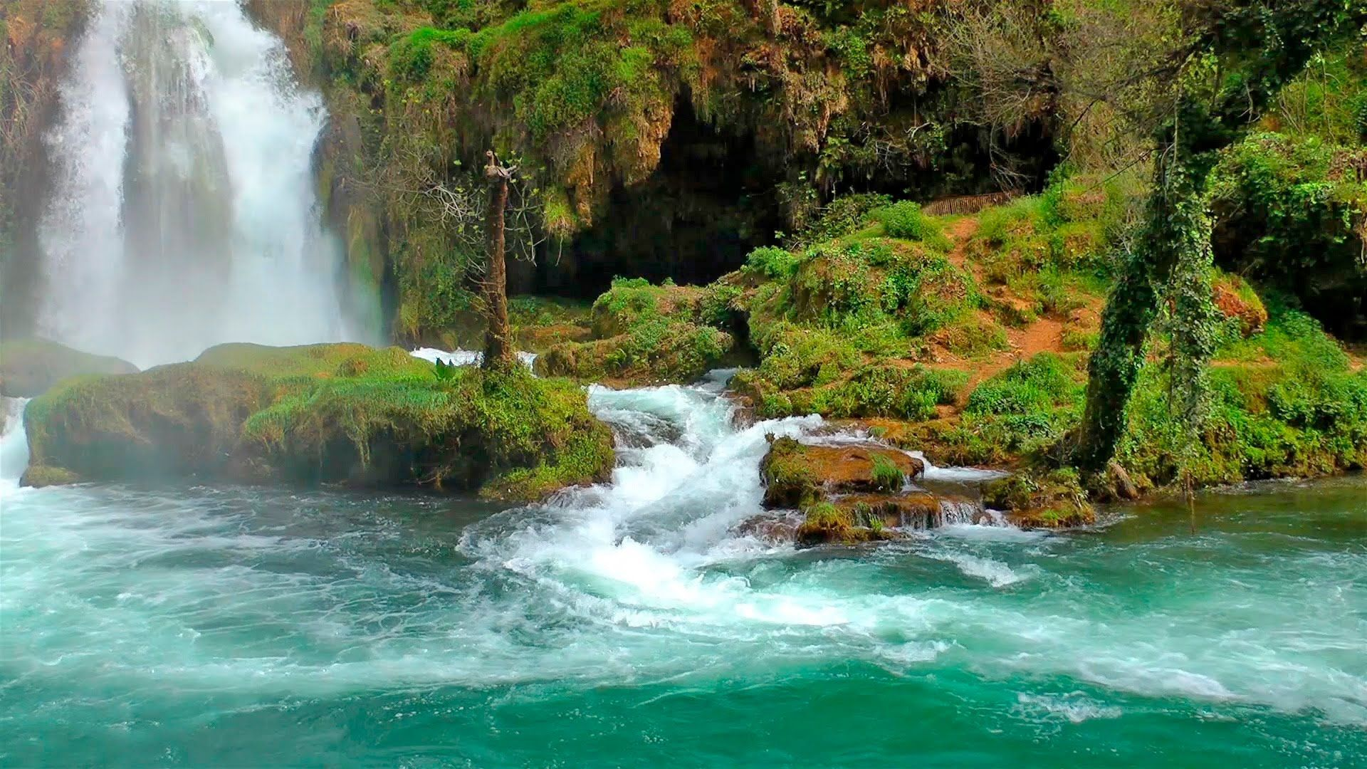 Relaxing music with nature sounds of forest and zen waterfall for