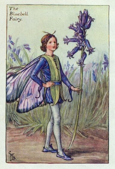 """Résultat de recherche d'images pour """"fairie jacinthe des bois"""""""