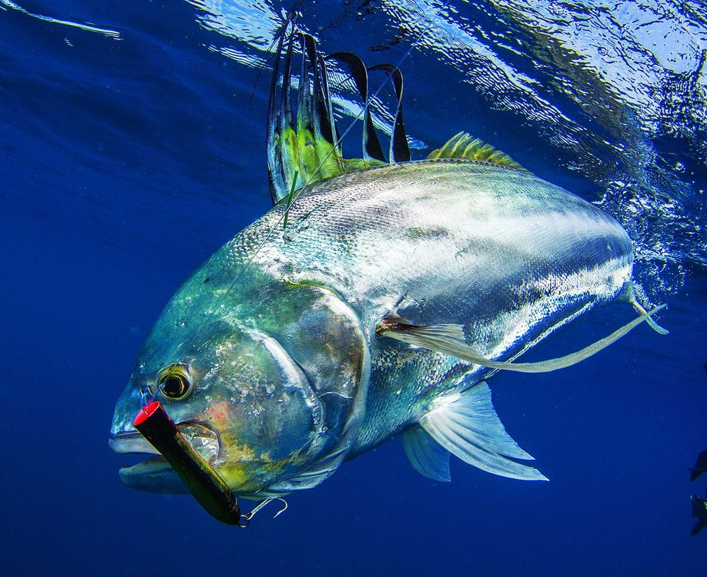 Fishing Vacations For Anglers Fish Salt Water Fish