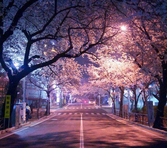 350cm White Led Cherry Blossom Tree Blossom Trees Cherry Blossom Tree Ornamental Trees