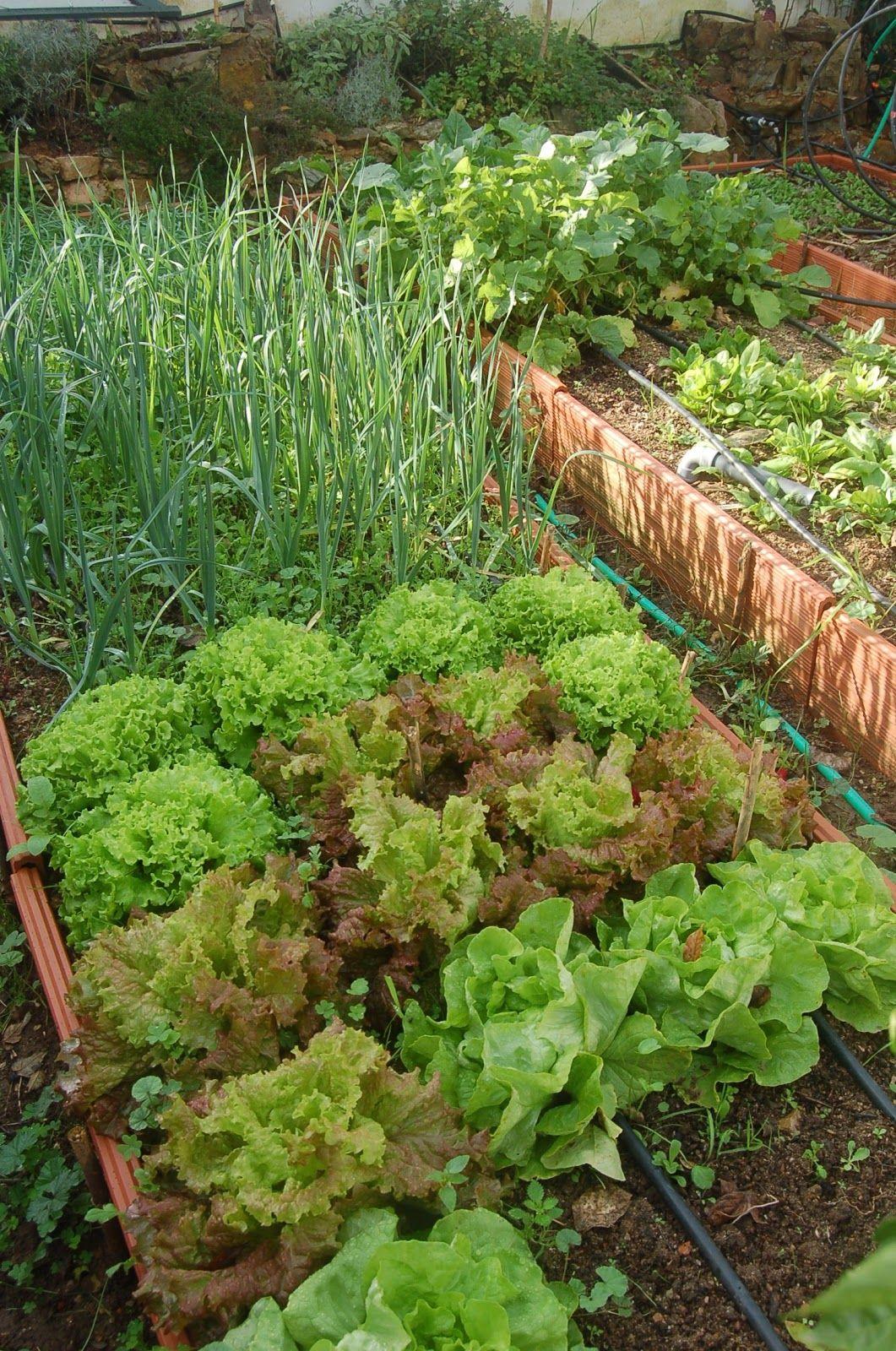 El Huerto Casero De Ana Plants Pinterest Huerto Casero El  ~ Como Hacer Una Huerta Ecologica