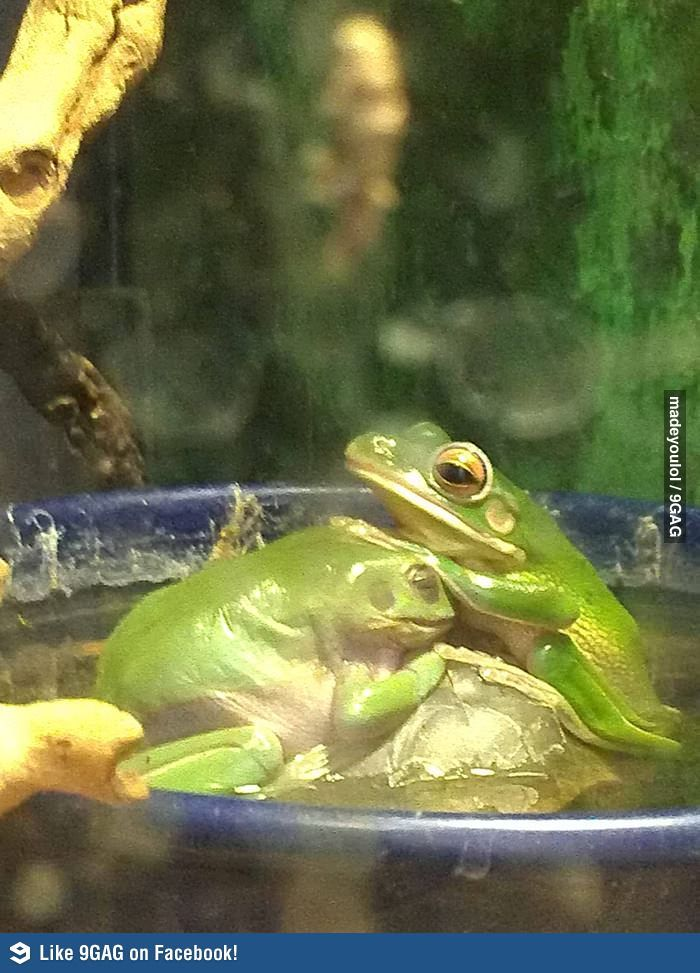 The frog is being blessed.