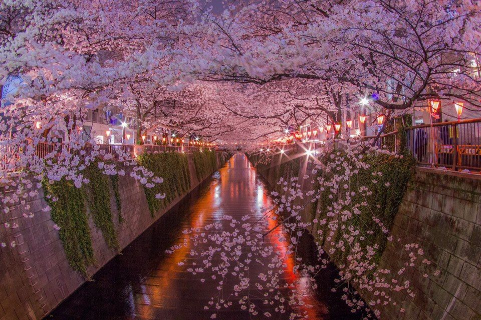 Beautiful Japan In Photography Outside Is Free Japan Pinterest Japan Beautiful Places