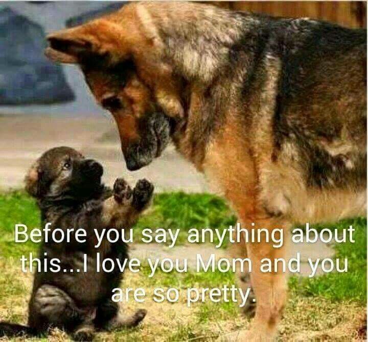 Before You Say Anything About This I Love You Mom German Shepherd Memes Puppies Funny I Love Dogs
