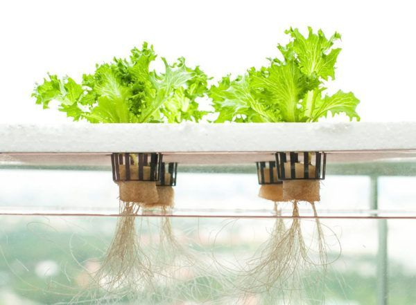 A horta hidropônica consiste no cultivo de vegetais apenas com a imersão de suas raízes em água rica em nutrientes, dispensando completamente a terra. Veja a seguir como ela funciona. A hidroponia não é uma prática moderna: é conhecida desde...