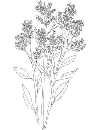 Click To See Printable Version Of Gypsophila Or Babys Breath Coloring Page