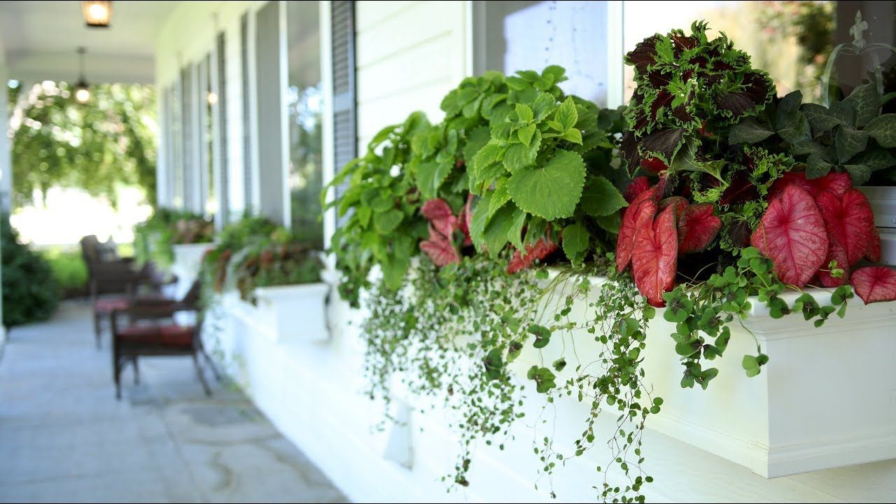 Shade Window Box Arrangement Garden Answer With Images