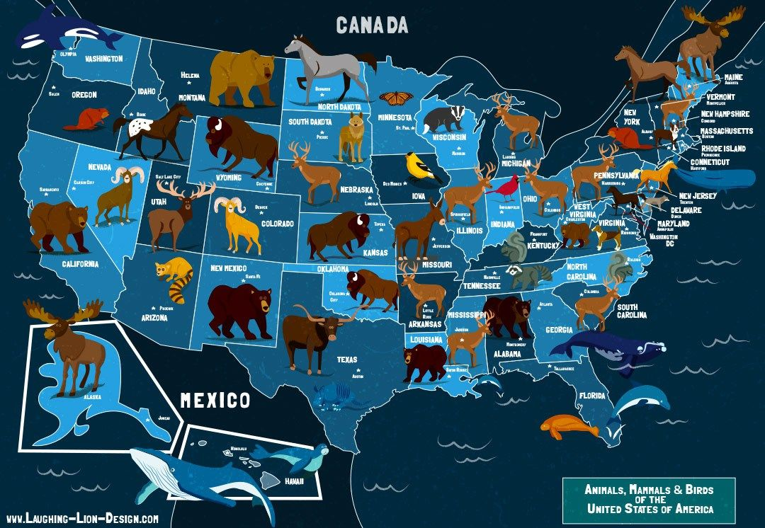 State Animals Of The USA Map   Map design, Illustration, Map