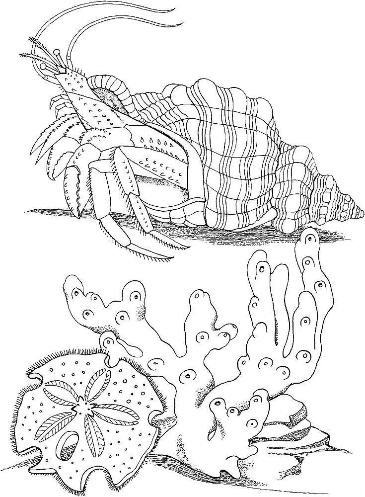 раскраски морские обитатели морей и океанов для детей: 6 ...