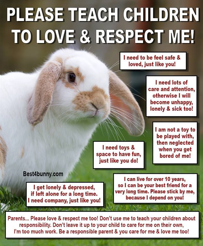 Teach Children To Love Respect Rabbits Www Best4bunny Com Rabbit Care Pet Bunny Rabbits Rabbit