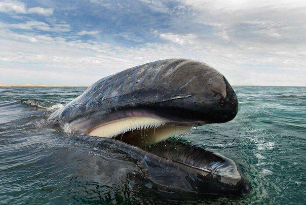 улыбка кита