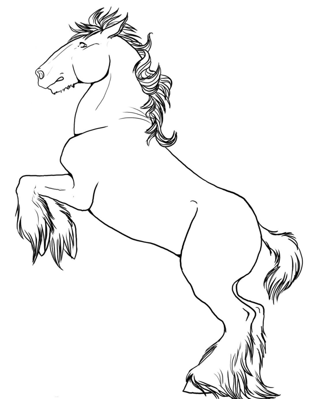 How To Draw A Horse Rearing Pictures