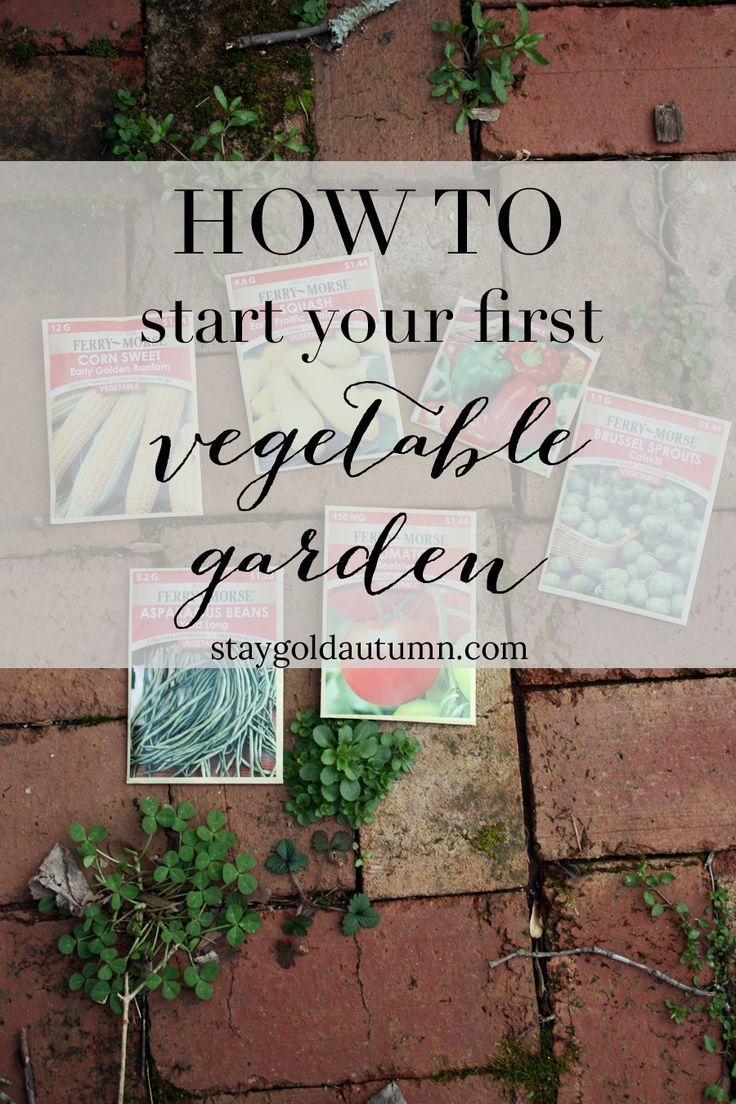 How to start your first vegetable garden Gardens Home and First