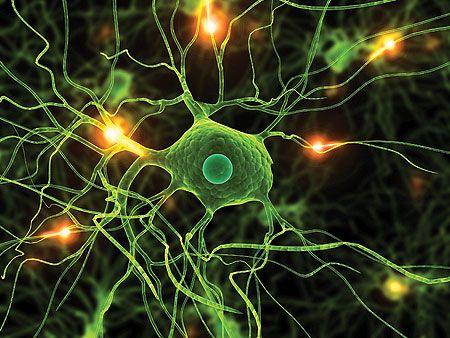 Afbeeldingsresultaat voor neurons firing