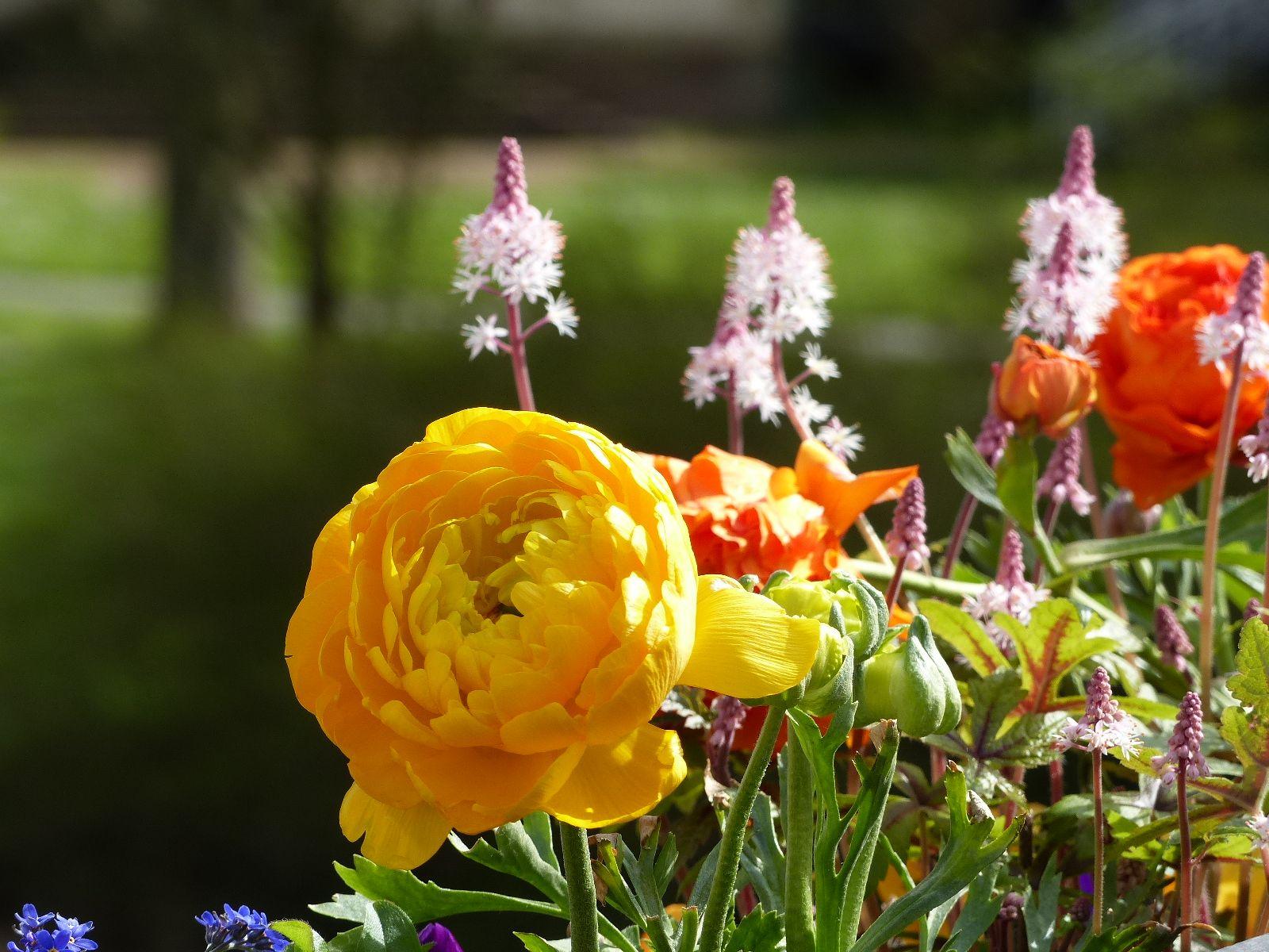 Höflichkeit ist die Blüte der Menschlichkeit. Wer nicht höflich genug,  ist auch nicht menschlich genug. (Joseph Joubert)
