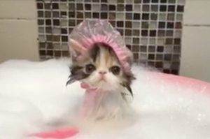 Bath Time for Kitty