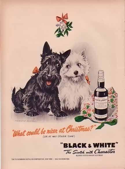 Black White Westie Dogs Westies Dog Black
