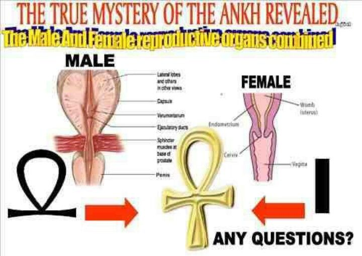 The Meaning Behind The Ankh Aka The Crux Aitsata Or The Ansate