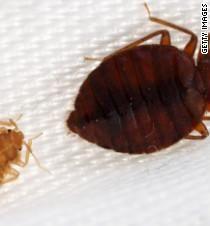 55946c57a264bd30ec06df19d99dc481 - How To Get Rid Of Bed Bugs Yahoo Answers