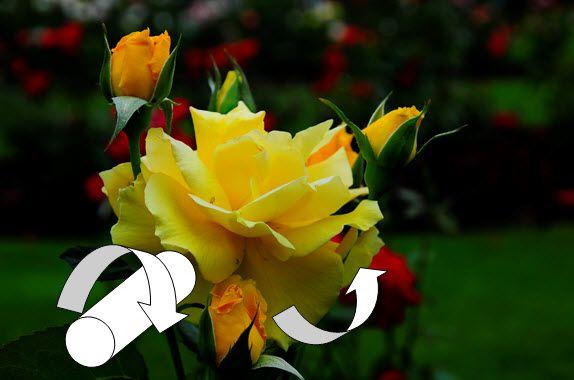 Painting Flowers with Sue Pruett at Art Apprentice Online